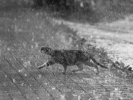 short story analysis cat in the rain by ernest hemingway the  cat in the rain ernest hemingway