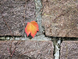 essay the last leaf